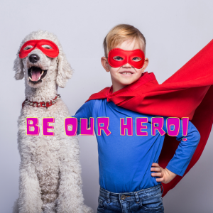 photo of large white poodle and young boy wearing red superhero masks and capes
